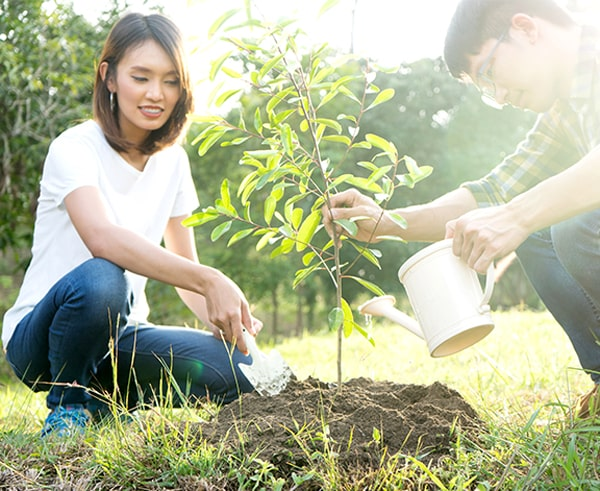 couple watering a tree